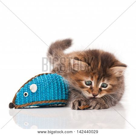 Cute kitten with colored toy mouse isolated on white background