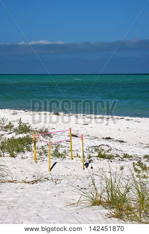 Protected turtle nest on the beach of Anna Maria Island Florida