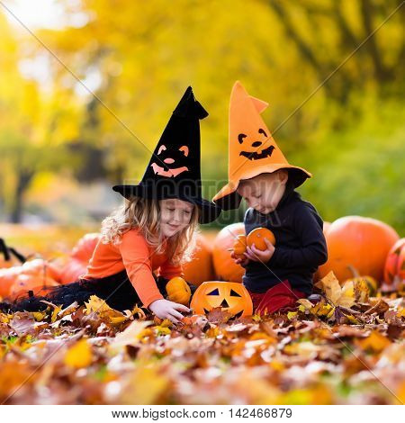 Children wearing black and orange witch costumes with hats playing with pumpkin and spider in autumn Park on Halloween. Kids trick or treat.