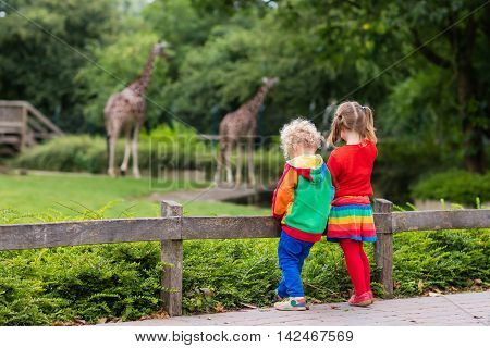 Two children little toddler boy and preschool girl brother and sister watching giraffe animals at the zoo on sunny summer day. Wildlife experience for kids at animal safari park.