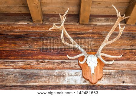 Deer antler in alpine hut in Valle Aurina South Tyrol Italy