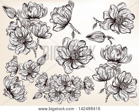 High detailed collection of hand drawn magnolia flowers in retro style