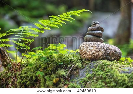 Cairns In The Forest