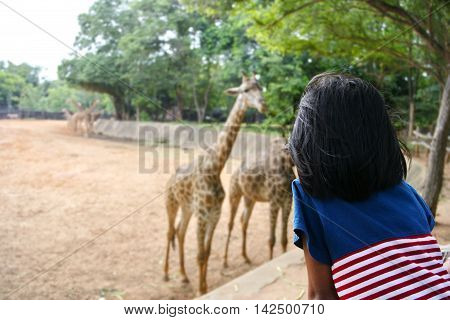 Kid looking giraffe at the zoo. (Korat zoo in Thailand)