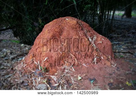Big Anthill For Termite /  House of  Termite.