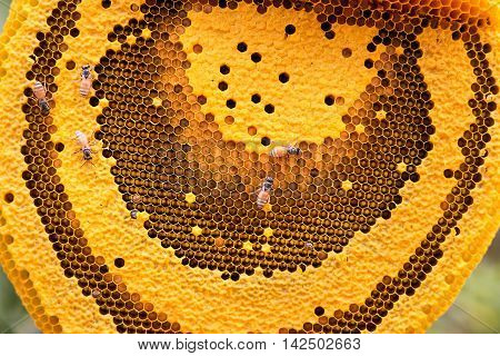 The working bees on the honeycomb with sweet honey.