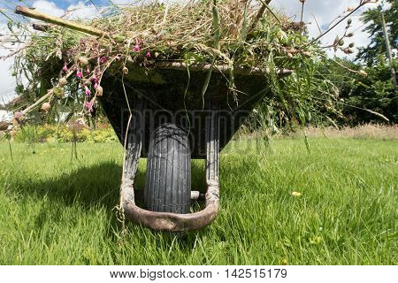 A full garden wheel barrow on long grass. A front on view from a low view point showing the wheel and the contents.