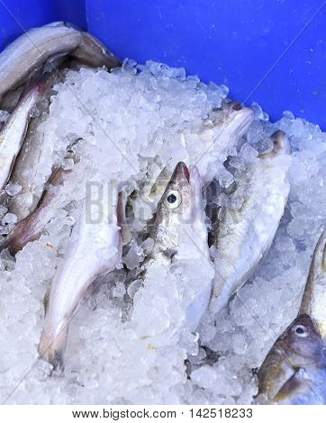 Fresh hake on ice. Fresh fish at a market stall.