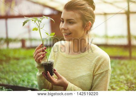 Farmer Girl Holding Green Seedlings In Sunny Greenhouse