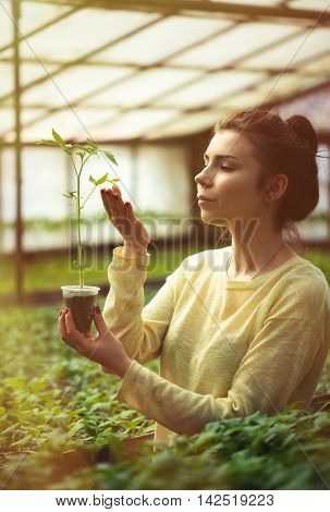 Farmer Girl Holding Green Seedlings In Sunny Greenhouse