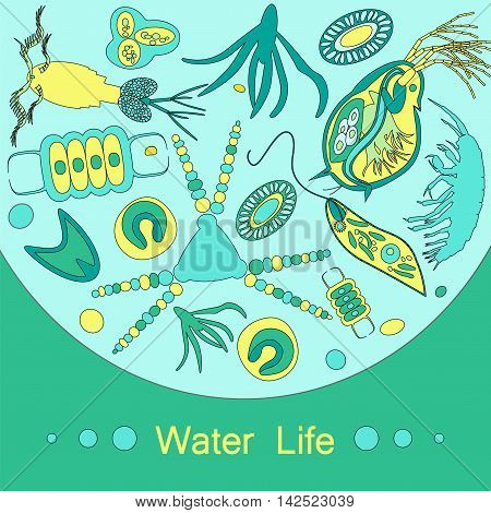 Phytoplankton and zooplankton. Vector illustration with small organism of plankton on environmental biological nature wildlife theme.