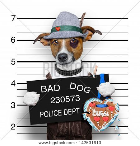 bavarian german jack russell dog with gingerbread and hat mugshot at police station
