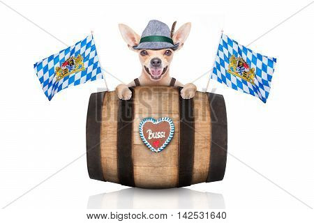 bavarian german chihuahua dog with gingerbread and hat behind barrel isolated on white background ready for the beer celebration festival in munich