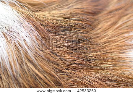Close up ful frame of dog hair