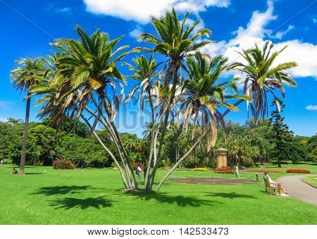 Palm trees in a group in a park