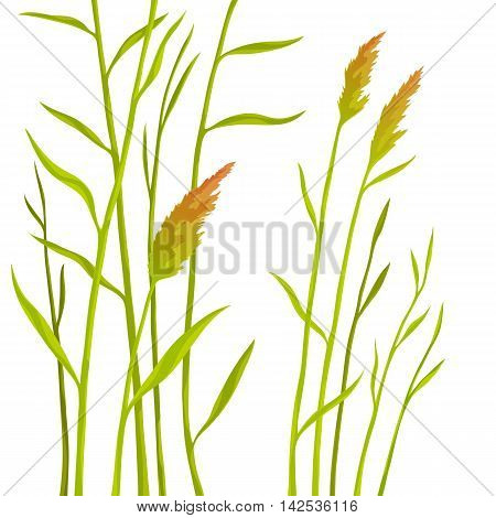 Reed isolated on white background. Branches and bushes cane with leaves green. Floral vector illustration.