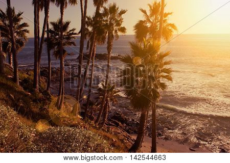 sunset over the ocean with a view at palms on the Laguna Beach California.