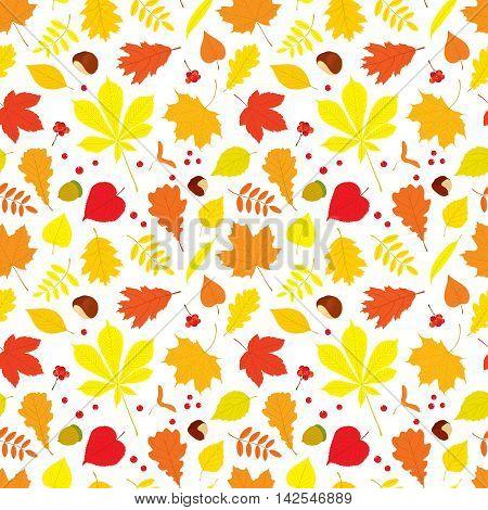 Autumn seamless pattern of different tree leaves - oak, chestnut, birch, Rowan, linden, jasmine, lilac, maple, willow, poplar, sycamore, Rowan berries, acorns, nuts on white background.