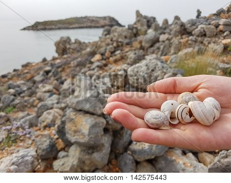 Shells in the hand of man. Beautiful nature, relaxation.