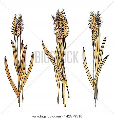 vector set of cartoon doodle wheat sheaves
