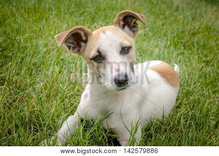 homeles dog with adorable face, cute puppy, anxiety in eyes, street dog