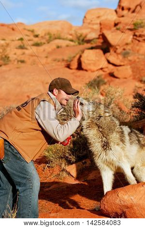 Arizona, Usa - April 16: Unidentified Man - Animal Trainer Sits With Gray Wolf On April 16, 2007 In