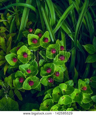 Spurge and others in the grass. Island Geltuhina