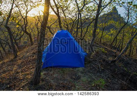 Blue tent in the forest at sunrise