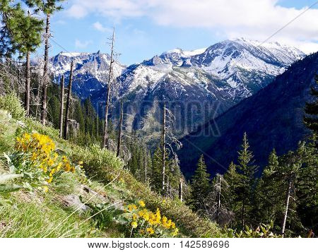 Cascade Mountains with snow, trees and flowers. Fourth of July Trail near Leavenworth and Seattle Washington state USA.