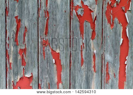 Flaking and peeling red plaint on a wooden door