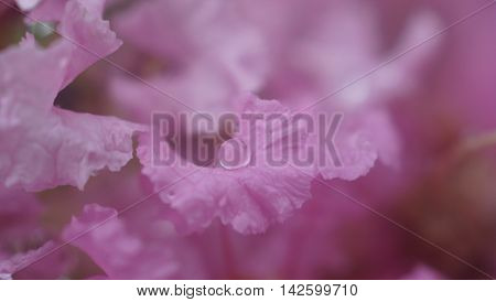 A drop of water on pink flowers.
