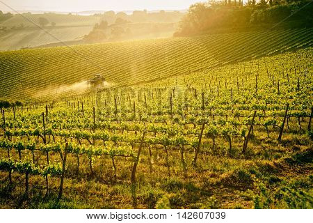 Tuscan vineyard at sunrise, tractor spraying vines, toned