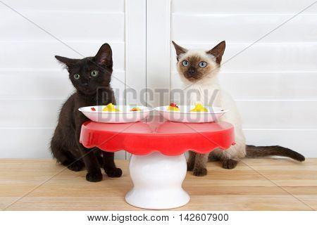 Black kitten green eyes sitting next to siamese kitten blue eyes at miniature red and white table wood floor shutters in background. Plates with mini rubber chickens for dinner. Looking perplexed