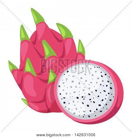 Pitaya or dragon fruit vector illustration.