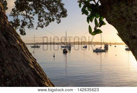 Looking through the Pohutukawa trees over the bay and boats at sunset. Russell Bay of Islands New Zealand NZ.