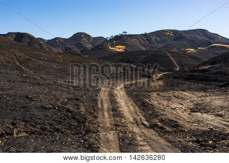 Dirt Road Through Burn Zone