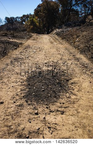 Burned Patch On Walking Trail