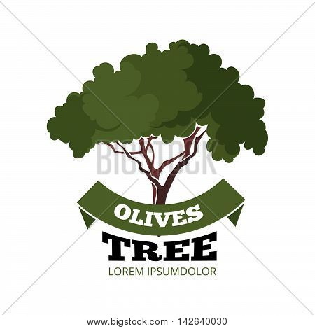 vector emblem of olives tree and green ribbon. Template for badges, emblems or label design. Illustration isolate on white background