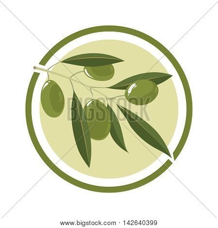 branch of olive tree with white olives. Vector Illustration in circle. Template for badges, emblems or label design.
