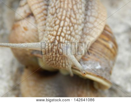 Snail crawling the green grass in garden
