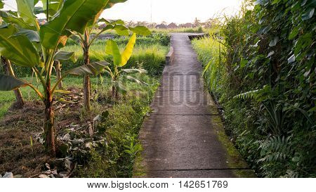 Narrow Path Leading Through Balinese Nature