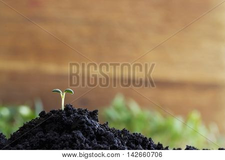 the green sprout sprouted in a soil