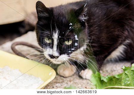 Homeless Cat With Milk Drops On Its Face