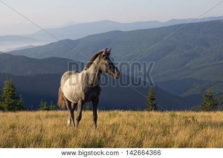 Beautiful morning landscape with the young horse
