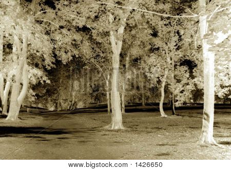 Glade Of Trees, Abstract
