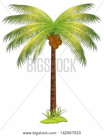 The Tropical tree palm with fruit coco.Vector illustration