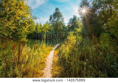 Beautiful Summer Green Forest. Countryside Road, Path, Way, Lane, Pathway. Sun Shining Through Canopy Of Trees Woods. Sunlight In Deciduous Forest, Summer Nature