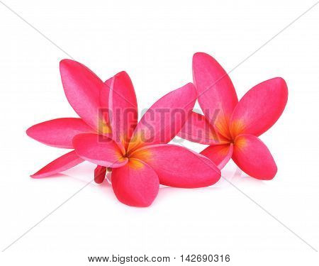 Plumeria flowers isolated on white background frangipani
