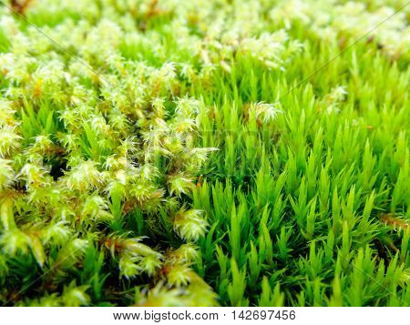 Moss different fresh and lush. Plant the moss covering the stones. Soft plant of the North.