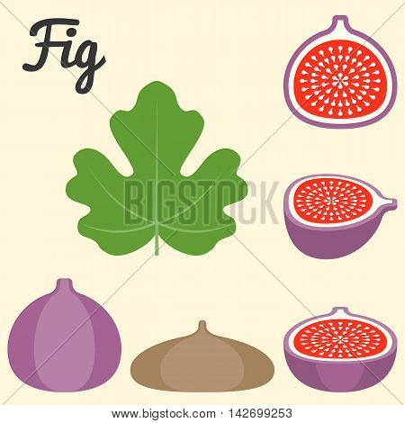 Vector fig, half fig and leaf icon set, flat design